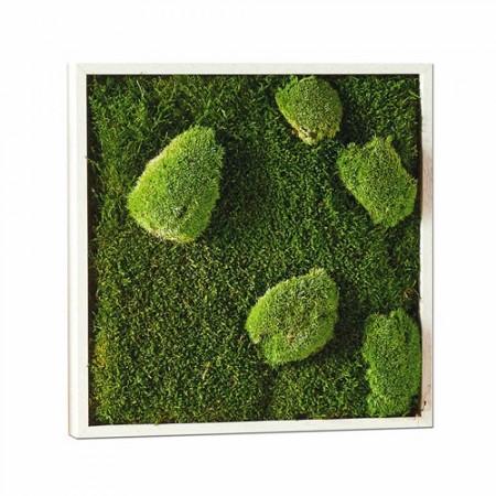 Tableau végétal 35 x 35 cm