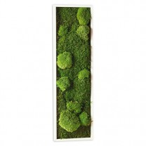 Tableau vegetal 20 x 70 cm