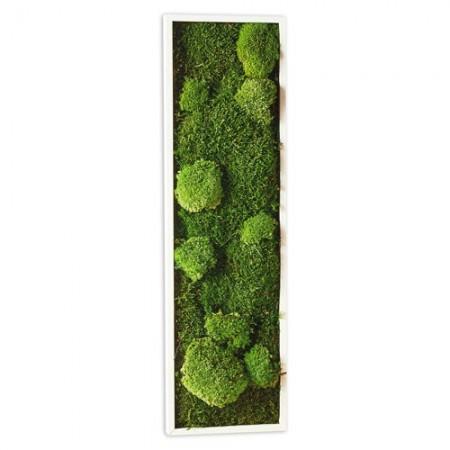 Tableau végétal 20 x 70 cm