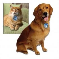 Spy Photos «Cats & Dogs»