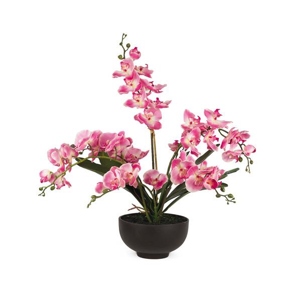 L'orchidée éternelle