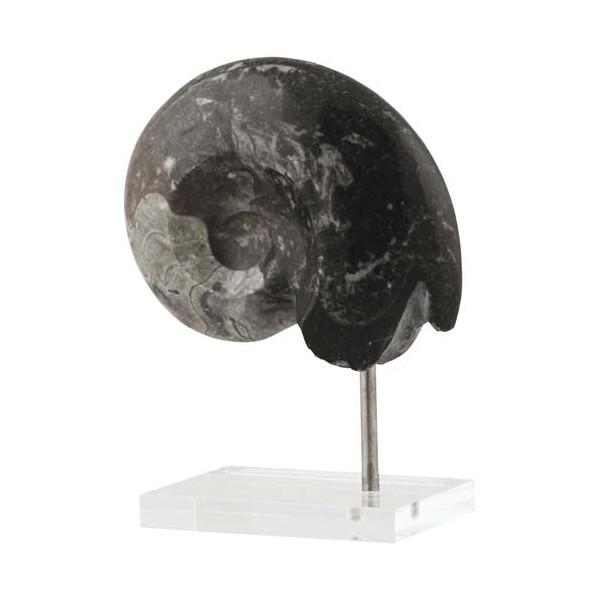 """Le fossile """"Trésor"""" de la nature"""