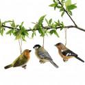 Trio d'oiseaux enchanteurs