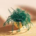 Plante repousse-insectes - les 3